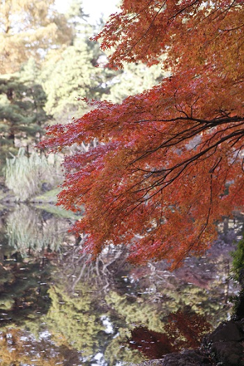 新宿御苑 紅葉