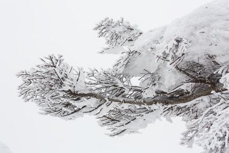 蔵王樹氷まつり 2016