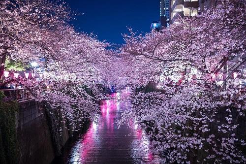 お花見 目黒川