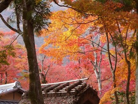 紅葉 嵐山 おすすめ