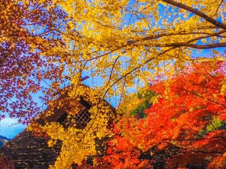 香嵐渓 紅葉 時期