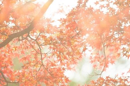 紅葉 日光 おすすめ