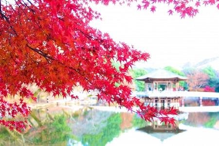 奈良公園 紅葉 見頃